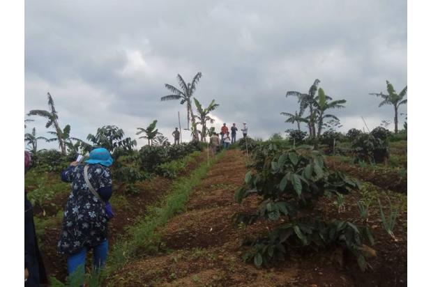 Tanah Kavling Murah di Kawasan Kebun Teh Gedeh Cipanas - SHM 17795375