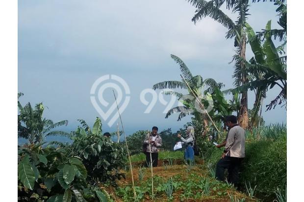 Tanah Kavling Murah di Kawasan Kebun Teh Gedeh Cipanas - SHM 17795376