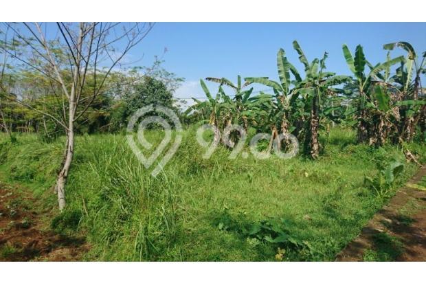 tanah kebun 13697686