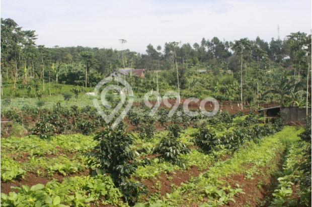 Investasi Tepat Tanah Kavling di Puncak Hanya 60 Jutaan Buy Back Guarantee 16509691