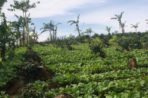 Investasi Tepat Tanah Kavling di Puncak Hanya 60 Jutaan Buy Back Guarantee 16509695