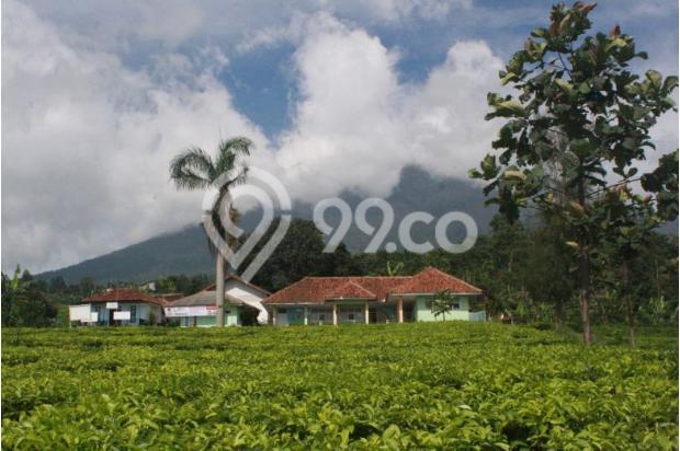 Investasi Tepat Tanah Kavling di Puncak Hanya 60 Jutaan Buy Back Guarantee 16509700