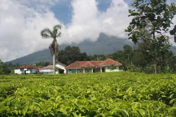 Investasi Tepat Tanah Kavling di Puncak Hanya 60 Jutaan Buy Back Guarantee 16509706