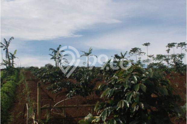 Investasi Tepat Tanah Kavling di Puncak Hanya 60 Jutaan Buy Back Guarantee 16509707