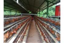 Dijual Ruang Usaha Peternakan Ayam Petelur, Bogor