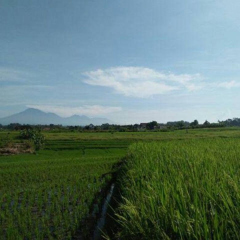 Dijual Tanah Di Tabanan Bali Harga Murah Lokasi Wisata