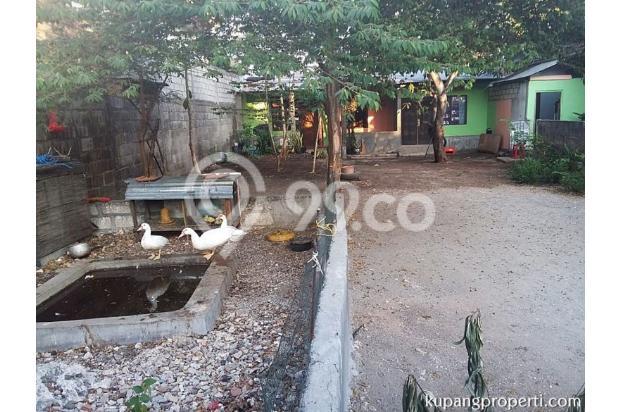 Rumah+Kos dijual dekat Kampus di Kupang 21463287
