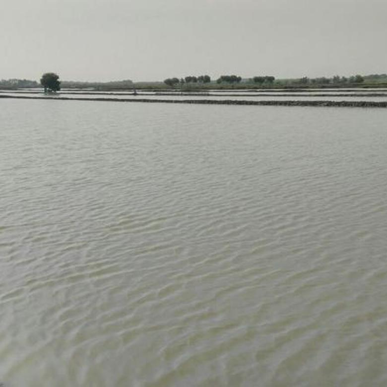 Tanah-Cirebon-2