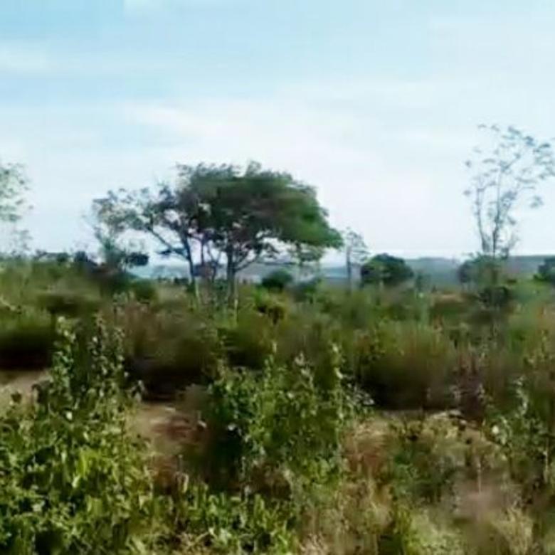 Tanah-Lombok Tengah-4