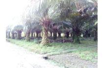 Tanah Dijual Kampung Baru SP4 Pangkalan Lada