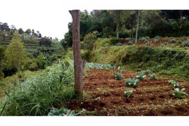 Jual Tanah daerah Cimahi, Cari Tanah di Cisarua Bandung 11013138