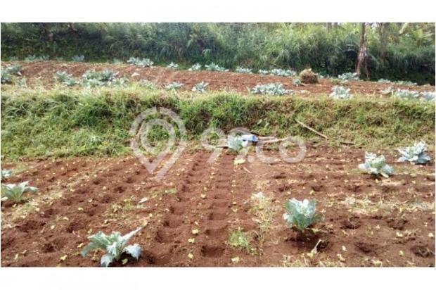 Jual Tanah daerah Cimahi, Cari Tanah di Cisarua Bandung 11013139