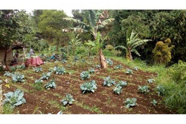 Jual Tanah daerah Cimahi, Cari Tanah di Cisarua Bandung 11013140