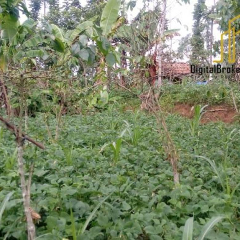 Tanah aktif kebun cocok buat villa lokasi ciwidey | INDAHWULAN