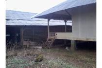 rumah,bangunan kandang sapi,dan tanah disewakan atau dijual