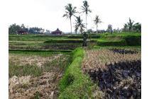 Tanah Murah View Sawah lingkungan Villa di Sentral Ubud LUBD666