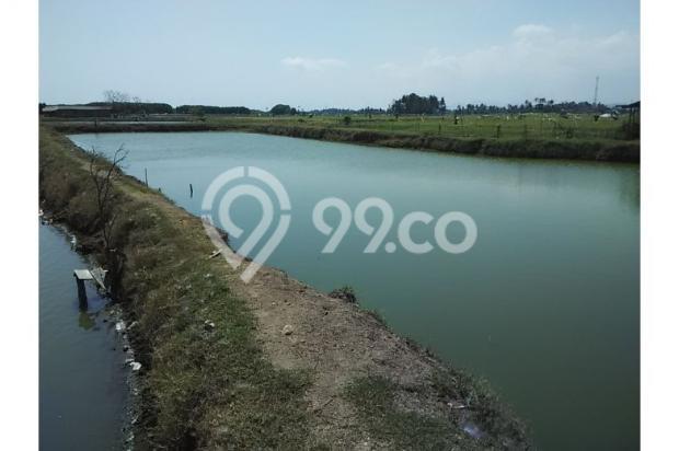 Tanah Investasi Termurah di Bali, Kab Negara 4692930