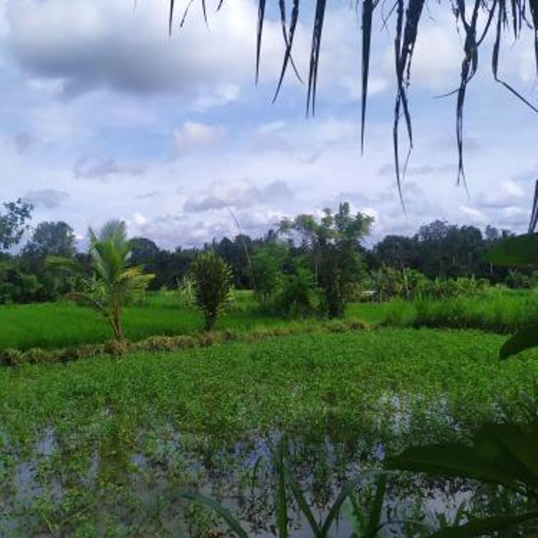 Tanah paling murah di Saba cocok villa dan kavling