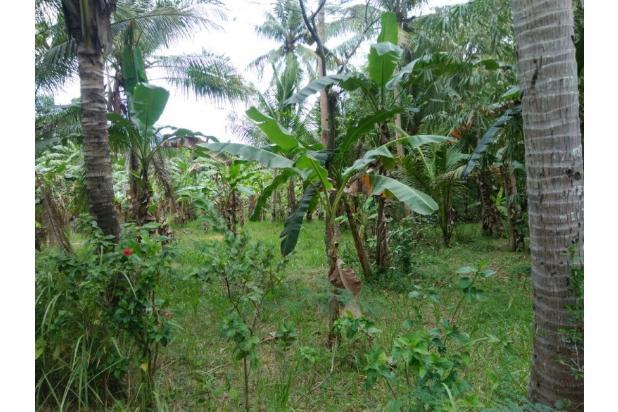 Beli Tanah Tepi Aspal Lalu Bangun Ruko: Anda Bakal Punya Aset plus Bisni 13245675