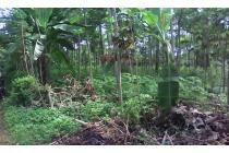 Tanah murah bonus pohon sengon Boja-Kendal