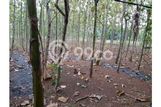 DiJual Tanah Kavling Murah Lokasi Strategis 13244921