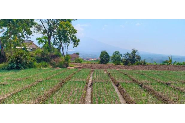 Rp8,09mily Tanah Dijual