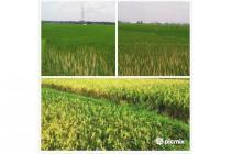 INVEST Sawah / Tanah Murah di Karawang Timur