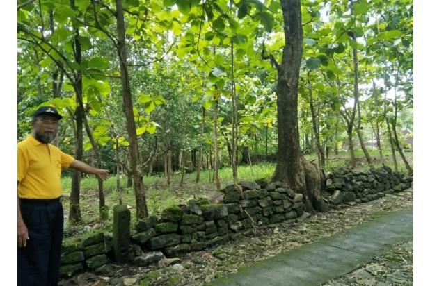 Dijual Tanah murah ditanami pohon jati pinggir jalan 16052176