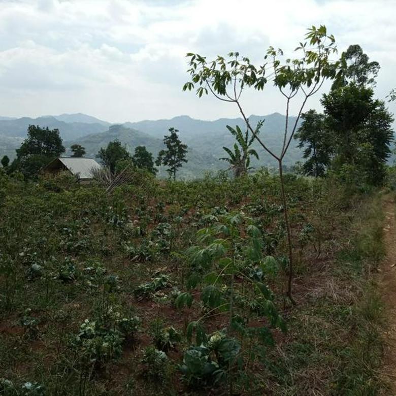 Tanah Subur Cocok Untuk Investasi di Tanami Sayuran di Ciwidey