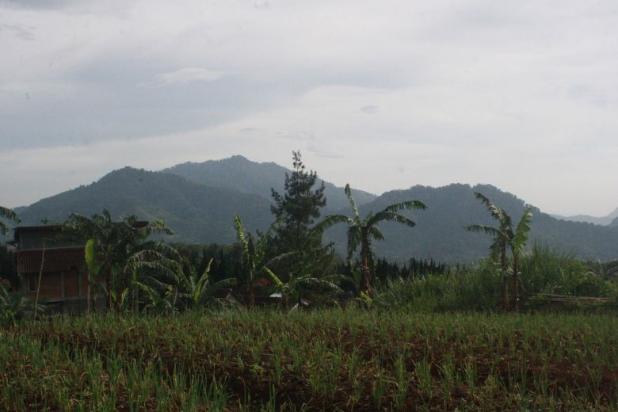 Tanah Kavling Murah di Puncak Jawa Barat Buy Back Guarantee By Developer 17795022
