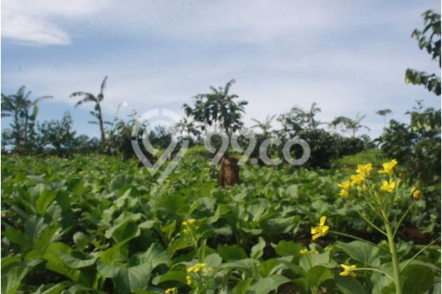 Tanah Kavling Murah di Puncak Jawa Barat Buy Back Guarantee By Developer 17795035