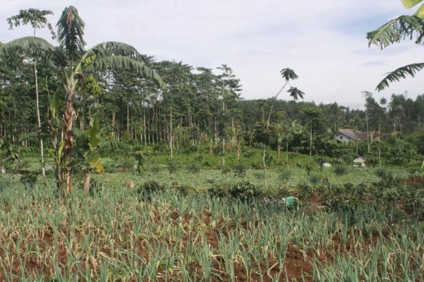 Tanah Kavling Murah di Puncak Jawa Barat Buy Back Guarantee By Developer 17795036