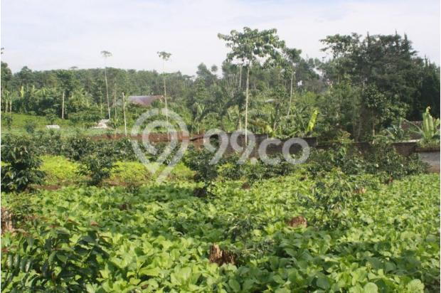 Tanah Kavling Murah di Puncak Jawa Barat Buy Back Guarantee By Developer 17795037