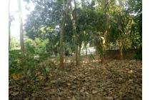 Jual Tanah Kebun Di Karawang