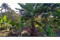 Tanah-Sukabumi Regency-5