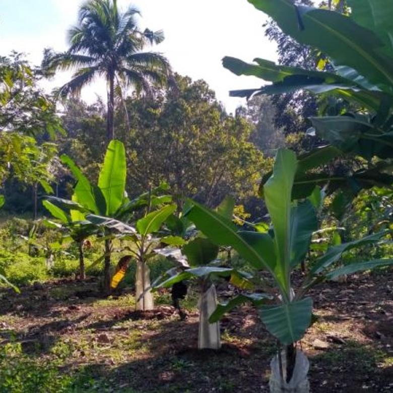Tanah-Sukabumi Regency-4