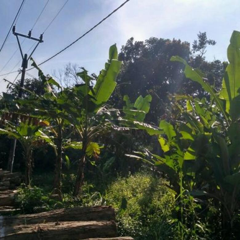 Tanah-Sukabumi Regency-2