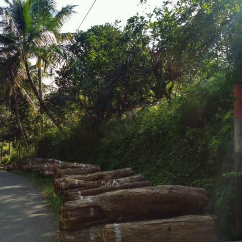 Tanah-Sukabumi Regency-1