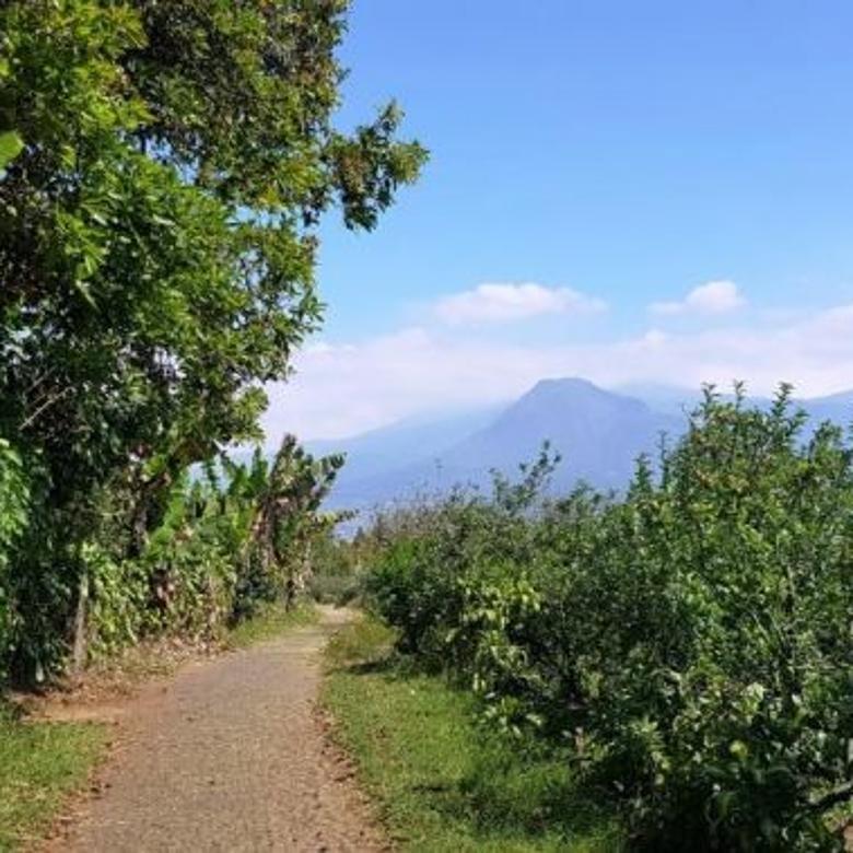Tanah area perkebunan luas 1.9 hektar view bagus air lancar