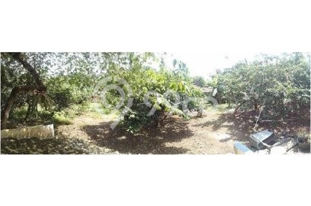 Dijual rumah beserta kebun yang sudah ditumbuhi berbagai jenis tanaman buah 12750387