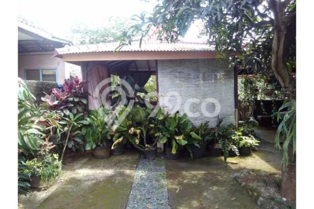 Dijual rumah beserta kebun yang sudah ditumbuhi berbagai jenis tanaman buah 12750390