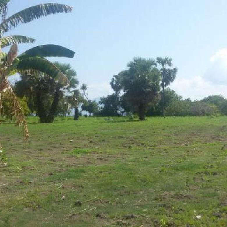 Tanah 1,1 ha Los Pantai di Maumere, Waigete - NTT