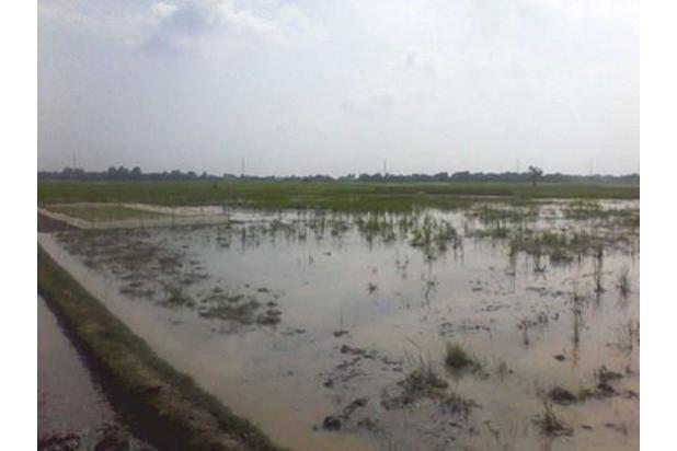 Jual tanah dekat jalur Provinsi banting Harga Surat SHM 16567016