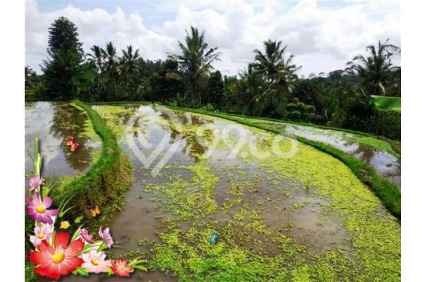 Jarang ada, 21.800 m2 View sawah,sungai,tebing di Ubud Tegalalang 3872595