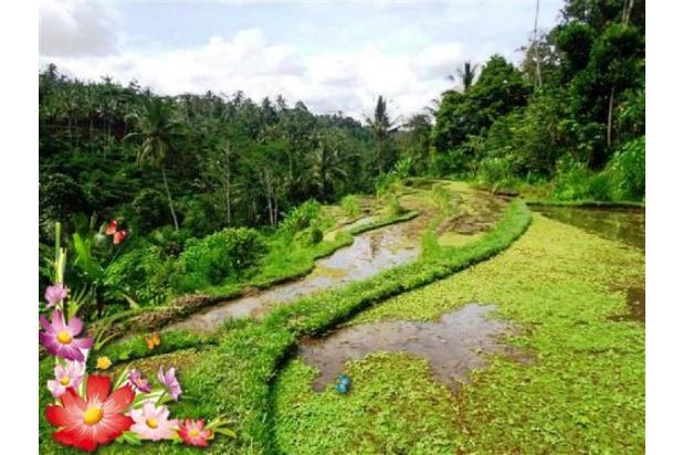 Jarang ada, 21.800 m2 View sawah,sungai,tebing di Ubud Tegalalang 3872596