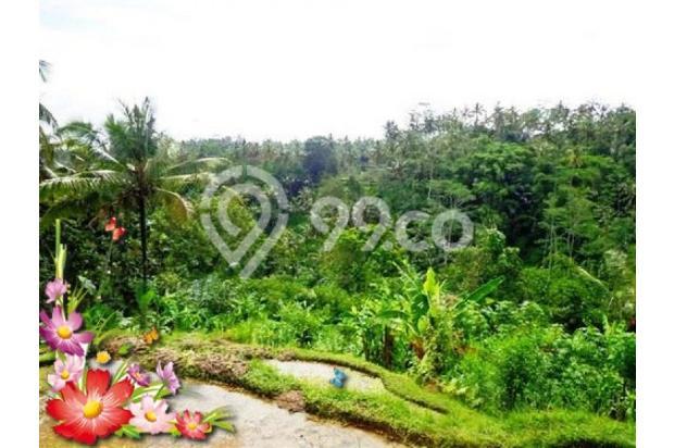 Jarang ada, 21.800 m2 View sawah,sungai,tebing di Ubud Tegalalang 3872598