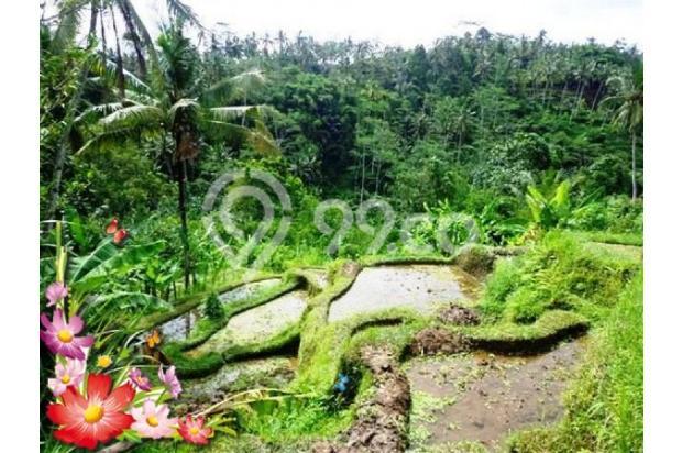 Jarang ada, 21.800 m2 View sawah,sungai,tebing di Ubud Tegalalang 3872602