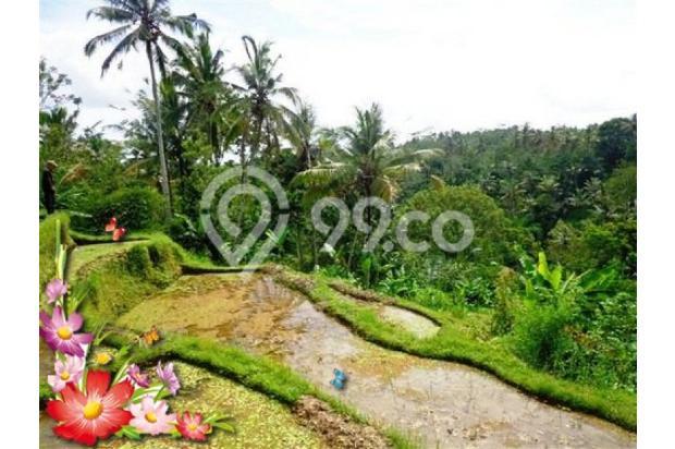 Jarang ada, 21.800 m2 View sawah,sungai,tebing di Ubud Tegalalang 3872604