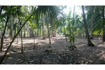 JUAL CEPAT Tanah di Kulon Progo, Yogyakarta MURAH