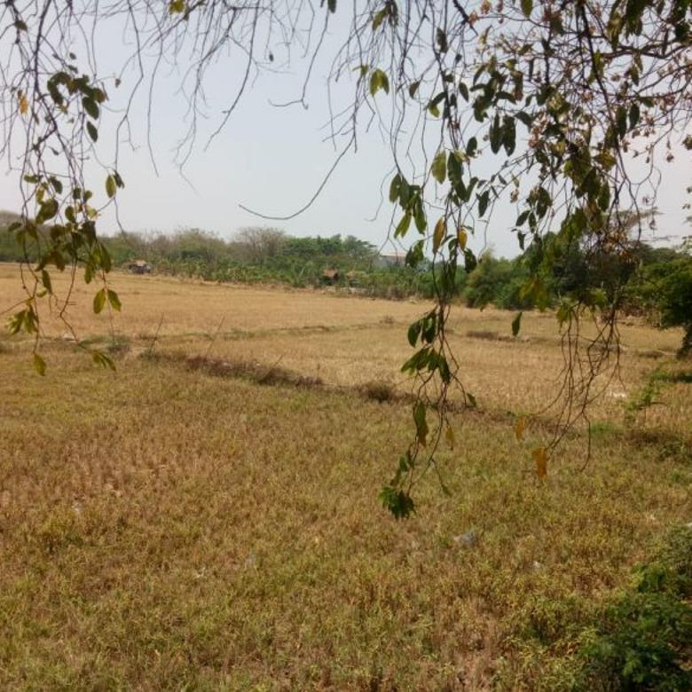 Tanah-Karawang-4